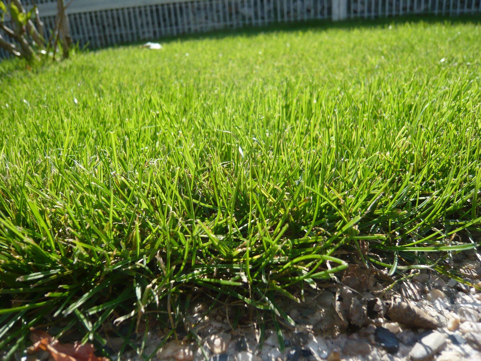 v-nekterych-minimalistickych-zahradach-byva-kompozice-opravdu-jednoducha-zalozena-na-travniku-a-soliternich-stromech.jpg