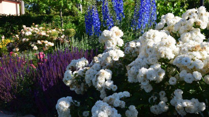 venkov-je-ve-znameni-barev-ktere-do-kompozice-prinasi-tradicni-druhy-kvetin-728x409.jpg