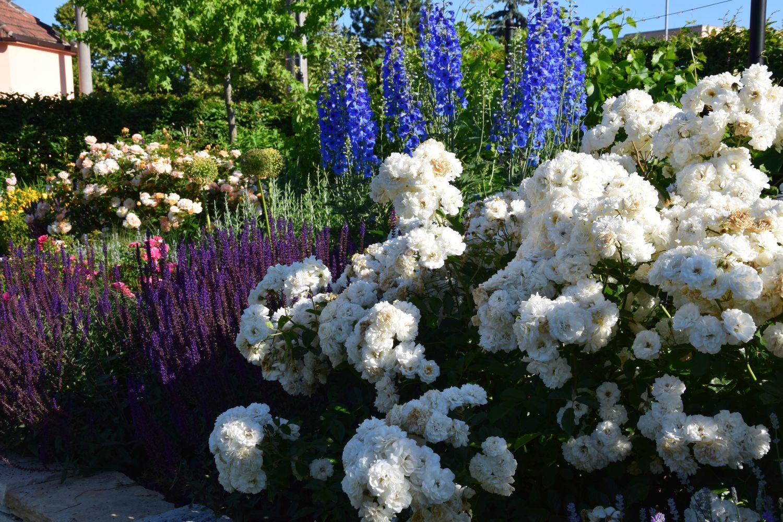 venkov-je-ve-znameni-barev-ktere-do-kompozice-prinasi-tradicni-druhy-kvetin.jpg