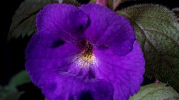 achimenmes-–-detail-kvetu-352x198.jpg