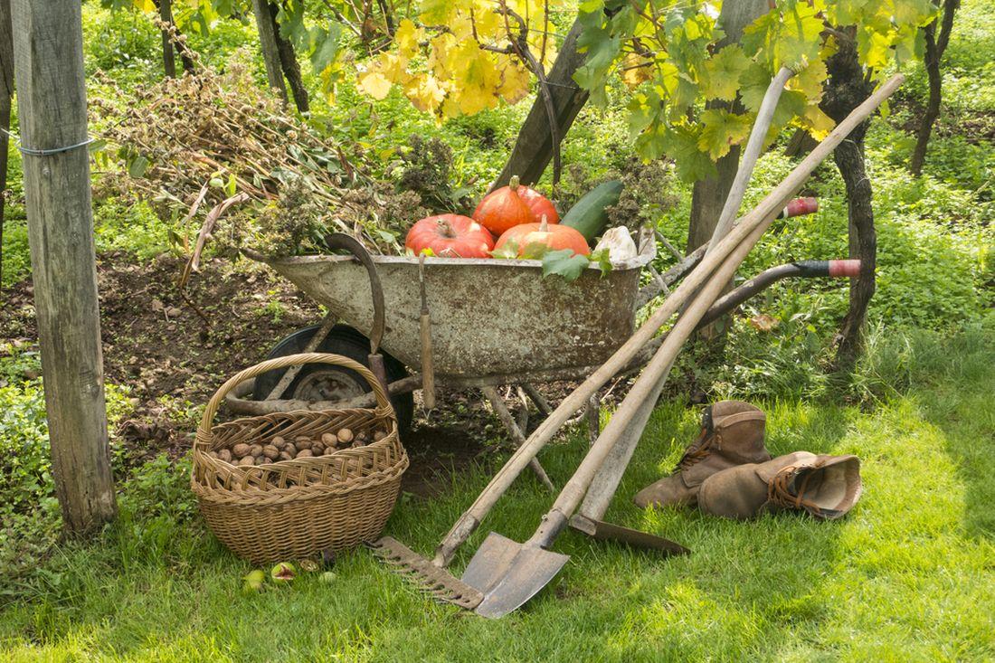 behem-podzimu-je-treba-sklidit-posledni-plodiny-vcetne-orechu-a-zahony-pripravit-na-zimu.jpg