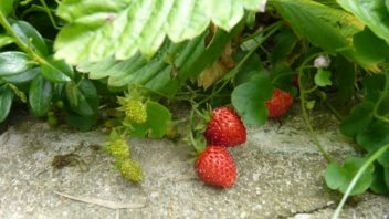detem-se-snazte-nabidnout-na-zahrade-chutne-ovoce-a-zeleninu.-352x198.jpg