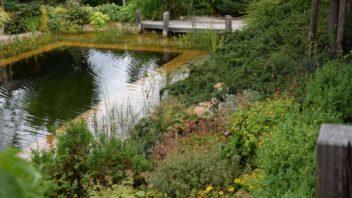 klidna-vodni-hladina-funguje-jako-zrcadlo-ktere-zvetsuje-prostor-zahrady-352x198.jpg