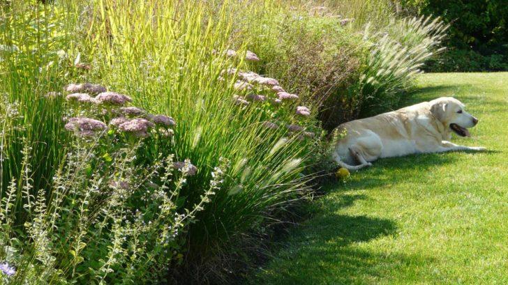 okrasne-travy-jsou-krasne-na-podzim-i-behem-zimy-728x409.jpg