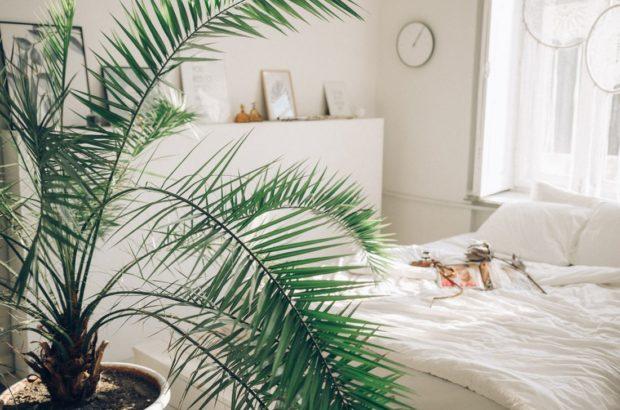 palmy-nemaji-v-oblibe-presazovani-620x410.jpg