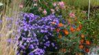 podzim-se-neobejde-bez-pestrych-trvalek-ktere-kvetou-do-zamrazu-144x81.jpg