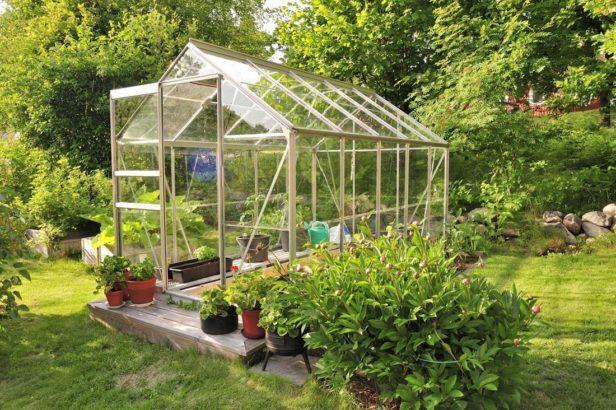pred-zacatkem-leta-je-vhodne-skla-bez-povrchove-upravy-povapnit-aby-nedoslo-k-popaleni-pestovanych-rostlin-616x410.jpg