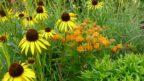 pri-tvorbe-planu-si-vymyslete-zkratky-rostlin-trvalky-lze-oznacovat-celym-nazvem.-144x81.jpg