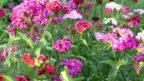 rostliny-jsou-skvelou-odmenou-za-snahu-ale-s-vyberem-druhu-budte-opatrni.-144x81.jpg