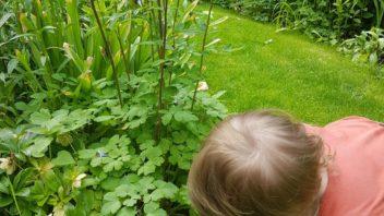 s-nejmensimi-detmi-vetsinou-nebyva-problem-rady-se-totiz-po-zahrade-probehnou.-352x198.jpg
