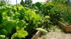 v-zeleninove-zahrade-je-mozne-hospodarit-na-ekologickych-zakladech.-144x81.jpg