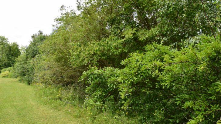 volne-rostly-zivy-plot-je-idealnim-hnizdistem-i-skrysi-pred-predatory.-728x409.jpg