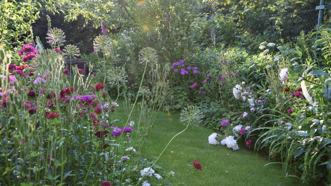 zahrada-pro-ptactvo-by-mela-byt-idealne-trochu-divoka-a-prirodni.-1100x618.jpg
