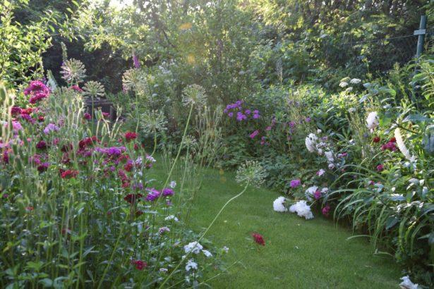 zahrada-pro-ptactvo-by-mela-byt-idealne-trochu-divoka-a-prirodni.-615x410.jpg