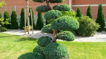 asijske-zahrady-jsou-v-nasem-prostredi-pomerne-diskutovanym-tematem.-352x198.jpg