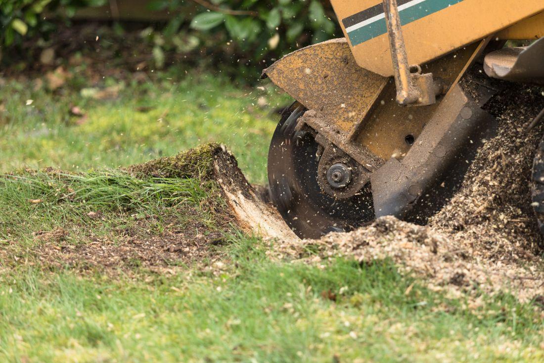 Jak se zbavit pařezů na zahradě