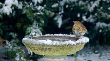 nez-zacne-mmrznout-postarejte-se-o-vodni-prvky-v-zahrade-352x198.jpg