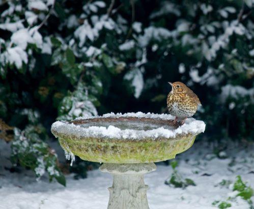 nez-zacne-mmrznout-postarejte-se-o-vodni-prvky-v-zahrade-499x410.jpg