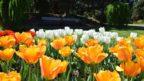 pestre-kvety-se-postaraji-o-skvelou-podivanou.-144x81.jpg