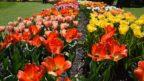pro-inspiraci-si-v-jarnich-mesicich-zajdete-do-dendrologicke-zahrady-v-pruhonicich.-144x81.jpg