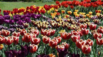 vicebarevne-kvety-na-sebe-vzdy-v-kompozici-upozorni.-352x198.jpg