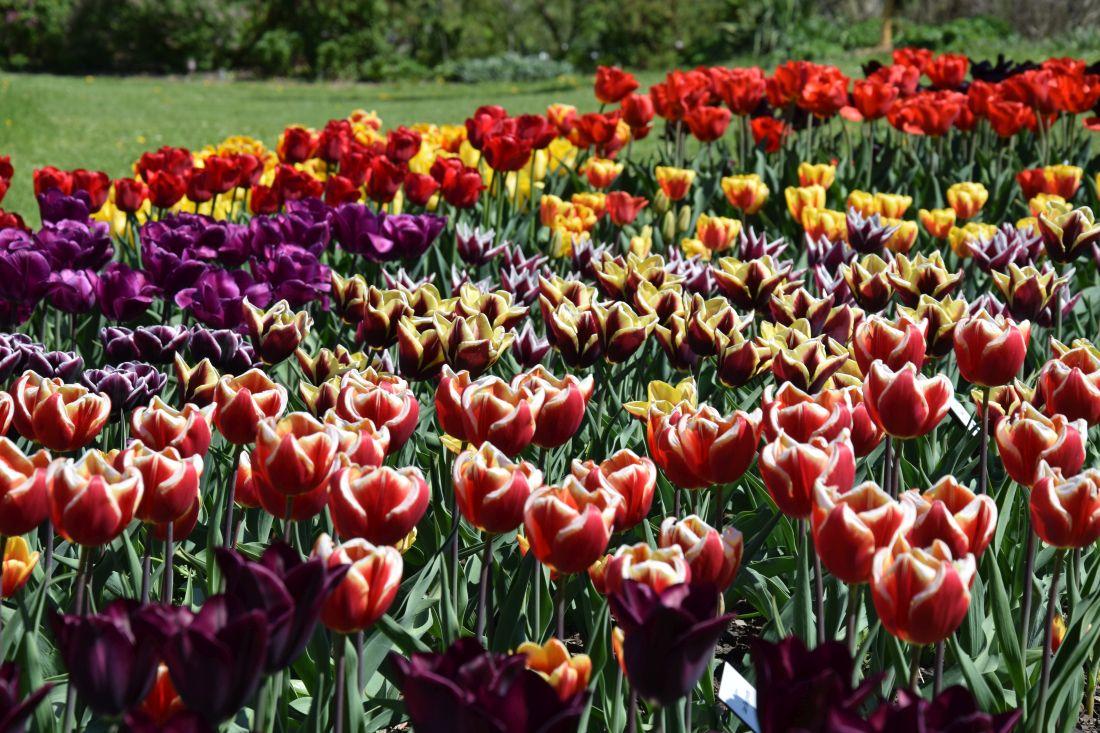 vicebarevne-kvety-na-sebe-vzdy-v-kompozici-upozorni..jpg