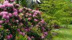 vyrazne-kvety-radi-penisniky-mezi-dominantni-rostliny-zahrady.-144x81.jpg