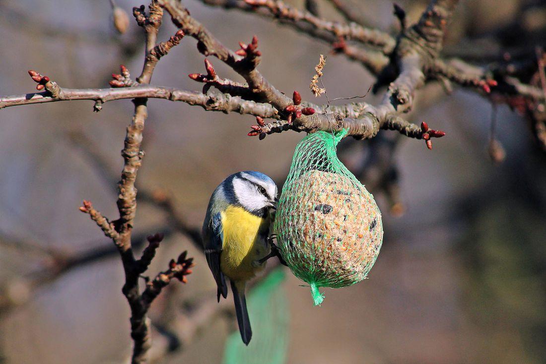 do-sitek-se-mohou-ptaci-zamotat..jpg