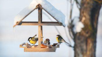 prikrmovani-je-dulezite-hlavne-v-zime-kdy-je-malo-prirozene-potravy-352x198.jpg
