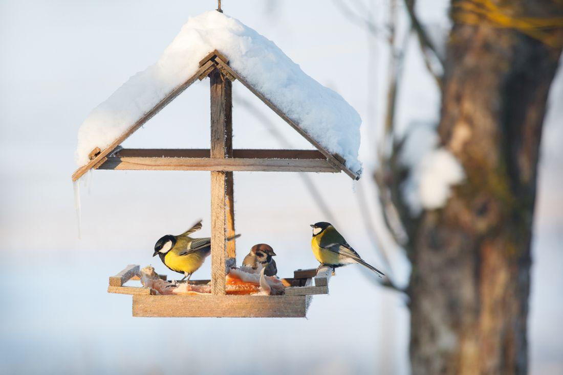 prikrmovani-je-dulezite-hlavne-v-zime-kdy-je-malo-prirozene-potravy.jpg