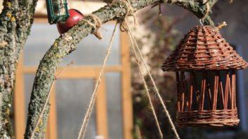 ptaky-potesite-take-cerstvymi-jablky-nemusite-se-omezovat-jen-na-smesi-semen-352x198.jpg