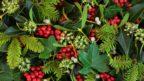 ve-vanocnich-dekoracich-se-skvele-doplni-i-s-jinymi-stalezelenymi-rostlinami-144x81.jpg