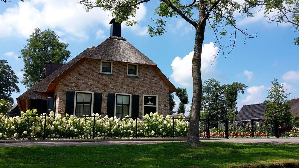 kvetouci-hortenzie-na-predzahradce-u-holandskeho-domu.jpg