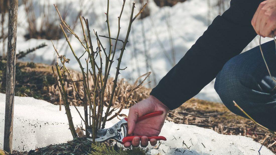 pece-o-zahradu-v-zime-1100x618.jpg