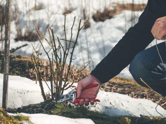 pece-o-zahradu-v-zime-547x410.jpg