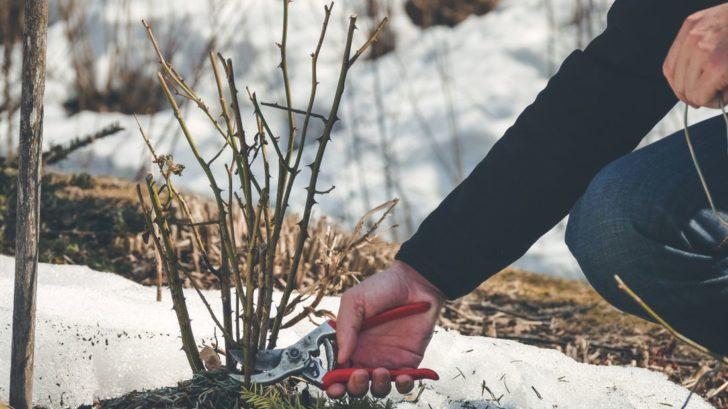 pece-o-zahradu-v-zime-728x409.jpg