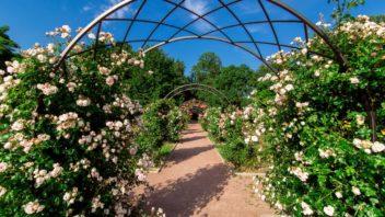 zahradni-oblouk-352x198.jpg