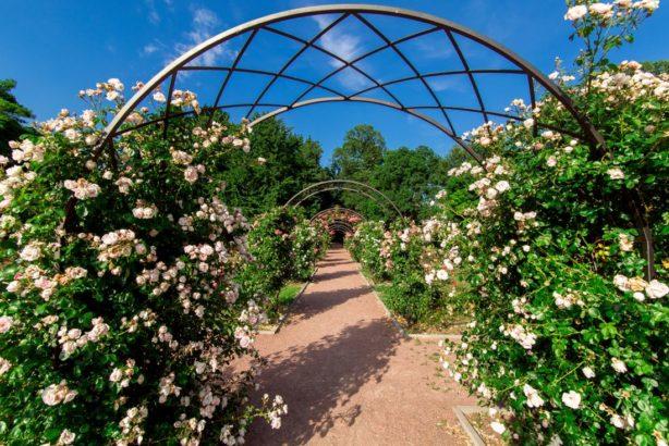 zahradni-oblouk-614x410.jpg