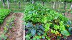 zeleninova-zahrada-1-144x81.jpg