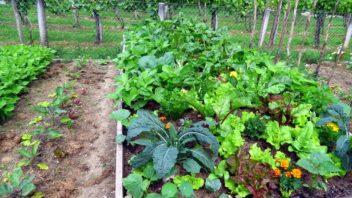 zeleninova-zahrada-1-352x198.jpg