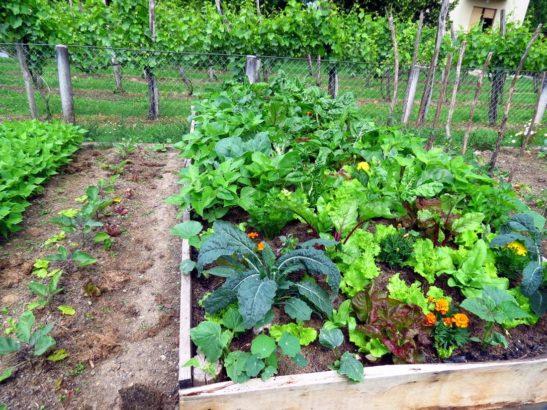 zeleninova-zahrada-1-547x410.jpg