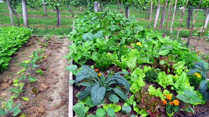zeleninova-zahrada-1-728x409.jpg