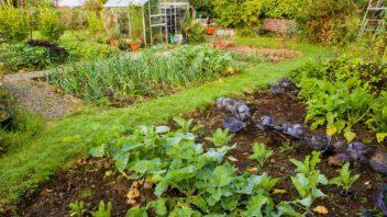 zeleninova-zahrada-352x198.jpg