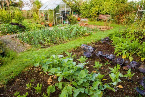 zeleninova-zahrada-614x410.jpg