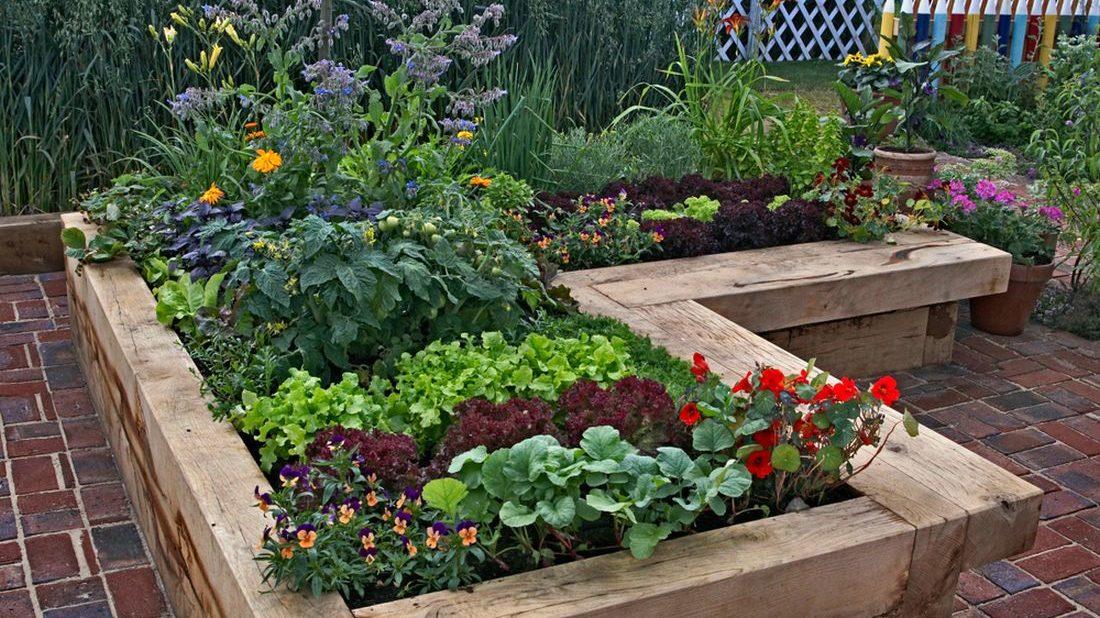 zeleninovy-zahon-1100x618.jpg