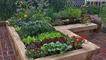 zeleninovy-zahon-352x198.jpg