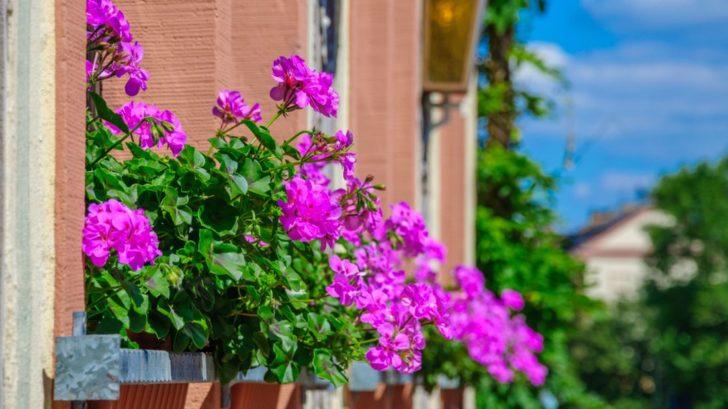 okna-s-muskaty-728x409.jpg