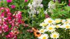 kvetouci-trvalky_shutterstock_487074736-144x81.jpg