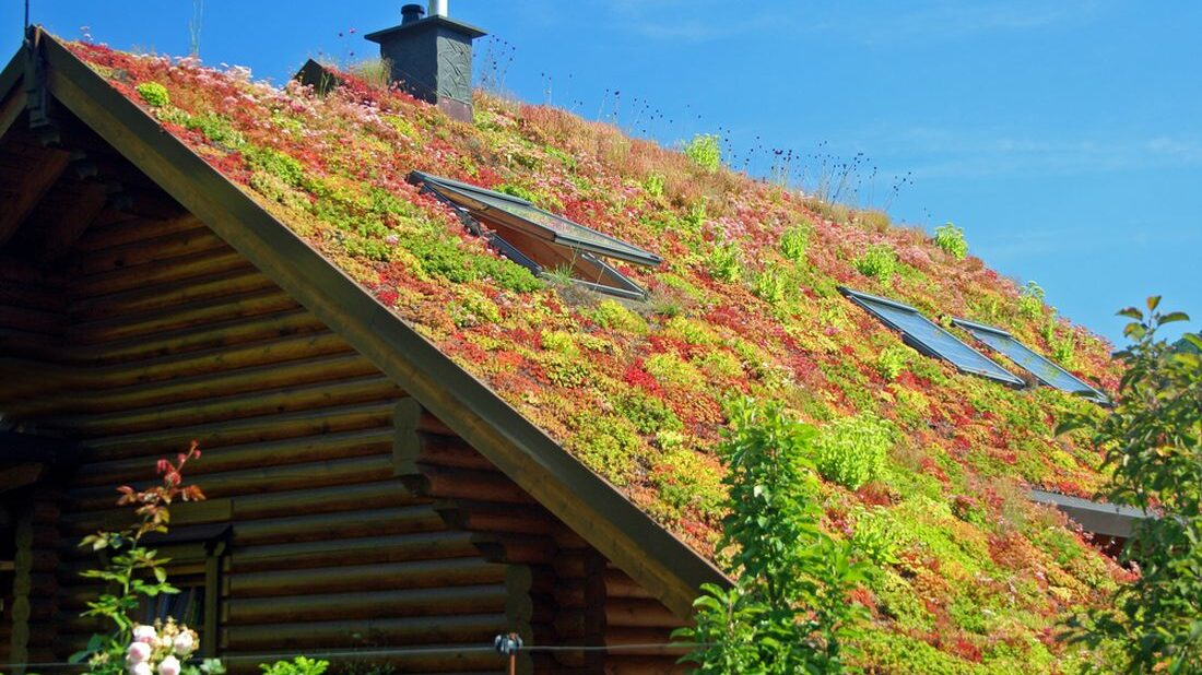 zelena-strecha_shutterstock_556420246-1100x618.jpg