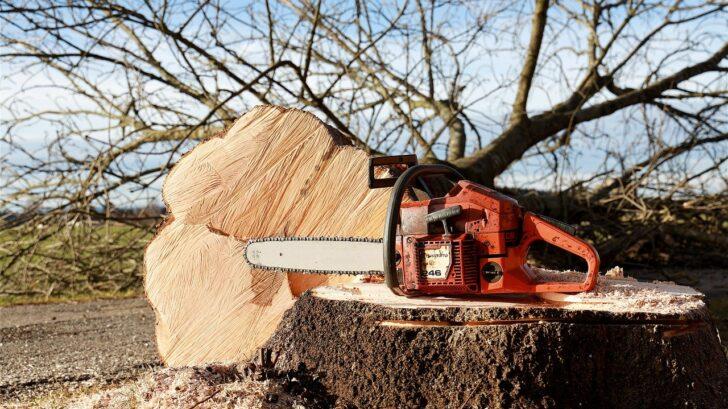 chainsaw-4815949_1280-728x409.jpg
